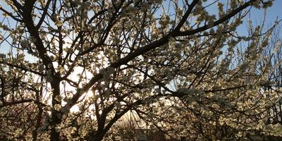 Весна уже здесь