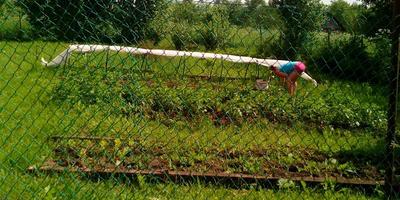 Домашнее задание №2: мой загородный огород на второй даче