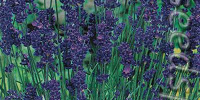 Пряно-ароматному огороду - быть!