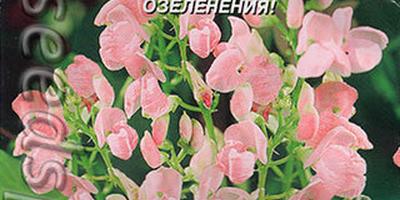 Декоративные лианы - прекрасная маскировка