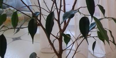 Необходим совет знатоков в уходе за комнатным растением