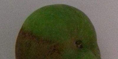 Чем поражается яблоня? Как реанимировать?