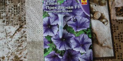 Петуния Елена Прекрасная F1. V этап. Пересадка