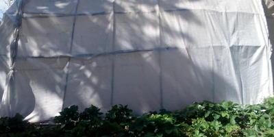 Заморозки в Июне, или Копчёные Огурцы