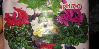 Помогите мне вырастить красивые цветы