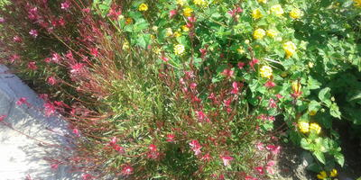 Помогите опознать растения