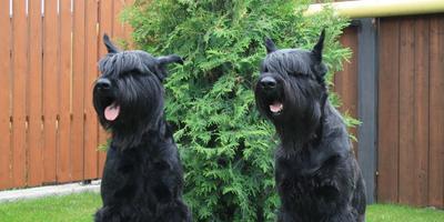 Любимый сад наших собак - жалко лишь, что лето в Сибири короткое