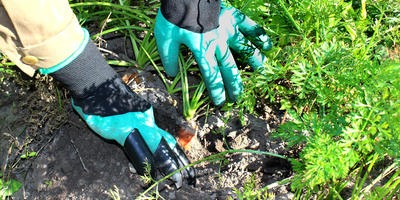 Тестируем перчатки с когтями Garden Genie Gloves. Убираем морковь