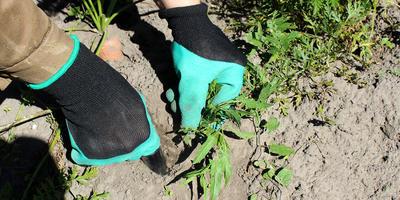Садовые перчатки с когтями - отличные помощники в борьбе с вьюном