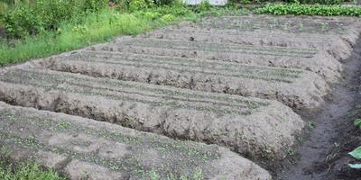 Домашнее задание №2: начальная организация на нашем огороде