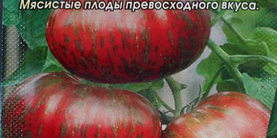 Томат Амурский Тигр. II этап. Всходы - появление настоящих листьев