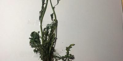 Подскажите, что за растения?