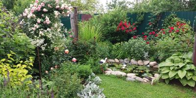 Мой сад - моя радость