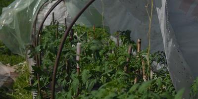 Холодно, но всё растёт, продолжаю бой за урожай!))
