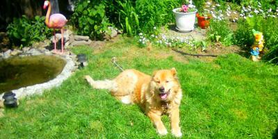 Рем на отдыхе в саду