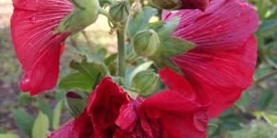 Улыбки, цветы, один овощ - два блюда :)