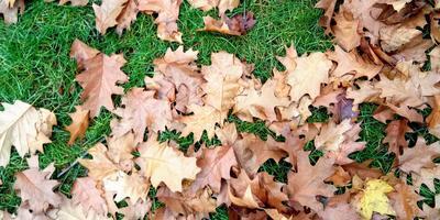Субботний день, осень, прогулка в собор Святой Екатерины