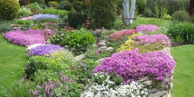 Мой прекрасный сад