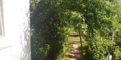 Заявка на тестирование травокосилки Husqvarna 128R