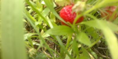 Наш летний огород)))... Первые ням-няшки)