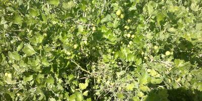 Наш летний огород)))... А кроме клубники еще...