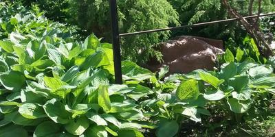 ...Любите ли вы сад так, как люблю его я...
