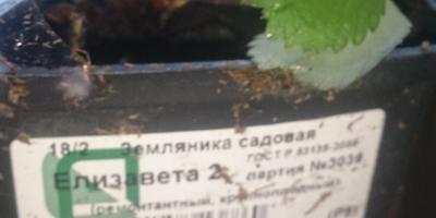 Отзыв об агрофирме Поиск