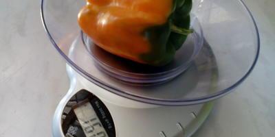 Сладкий перец Оранжевый бык - стадо в моей теплице