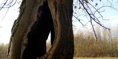 Дерево на обочине