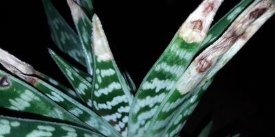 Помогите определить заболевание комнатного растения. Как его лечить?