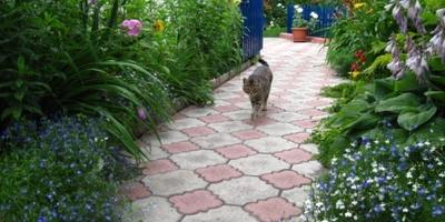 В любимом саду