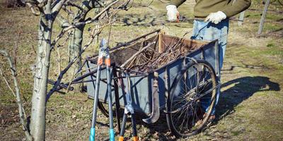 Урок 2. Плодовый сад весной: как защитить растения