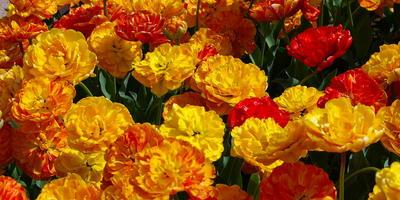 Как две капли воды: цветочные многолетники-дублеры