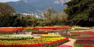 Смотрим и наслаждаемся: 68 сортов тюльпанов с крымского парада цветов