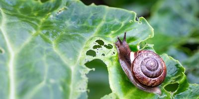 Эксперт ответит на вопросы о защите растений