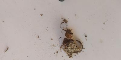 Какого растения эти семена?