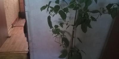 Что это за растения и как оно цветет?
