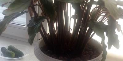 Помогите определить название растения. Как за ним ухаживать?