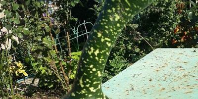 Декоративные тыквы для украшения сада...