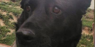 """Я - """"Черноглазый""""... (невыдуманная история о жизни уличной собаки)"""