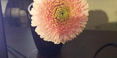 Подскажите, пожалуйста, что за цветок?