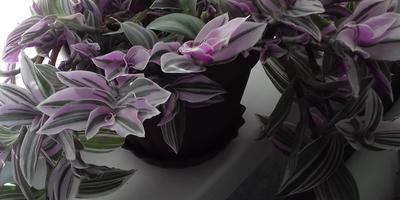 Подскажите названия этих цветов