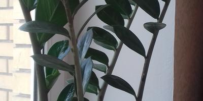 Как называются растения?