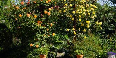 Мой южный сад с элементами итальянского сада