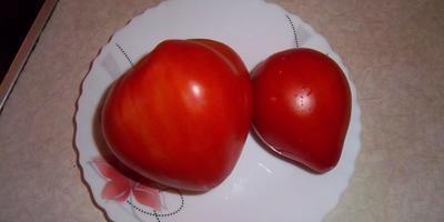 Отправлю по почте семена томатов или обменяю на другие сорта