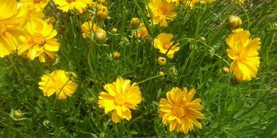 Подскажите, как правильно называется этот цветок?
