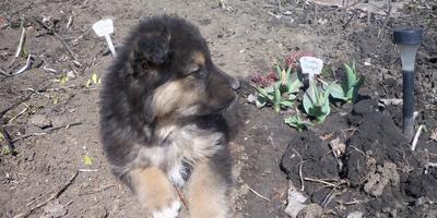 Наш новый помощник в саду... растёт вместе с садом