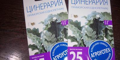Когда лучше сеять на рассаду цинерарию с серебристыми листьями?