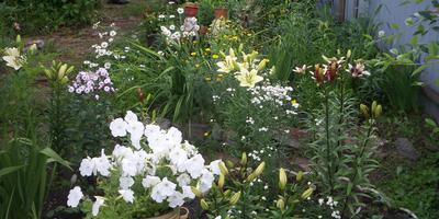 Какие растения можно включить в цветник с белыми лилиями, чтобы получить нюанс по цвету и контраст по форме?