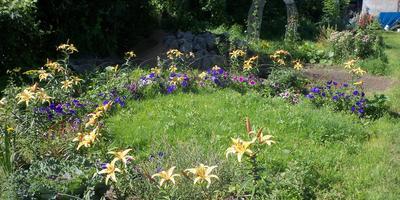 Какие растения можно включить в имеющийся цветник, если за основу взят нюанс по цвету и контраст по форме соцветий?